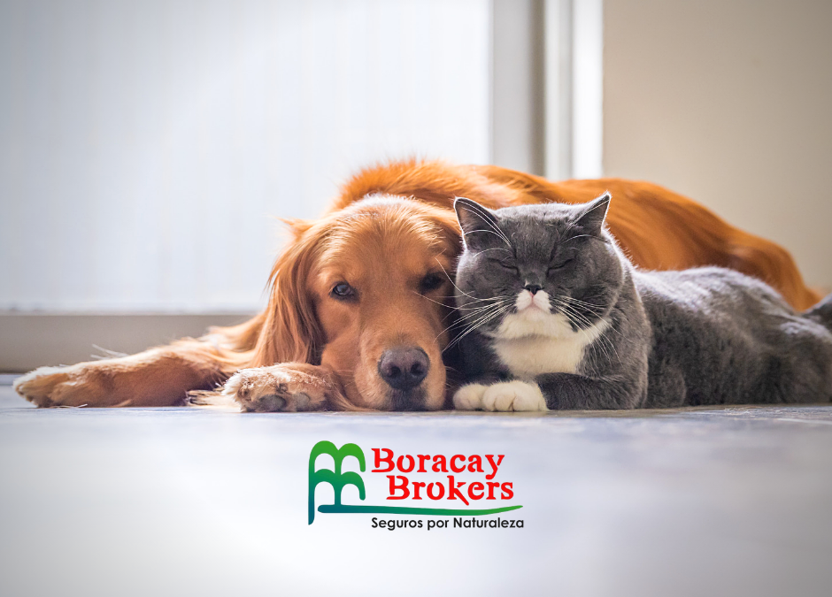 The best pet insurance is already here
